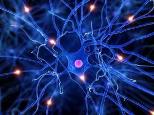 nervecells