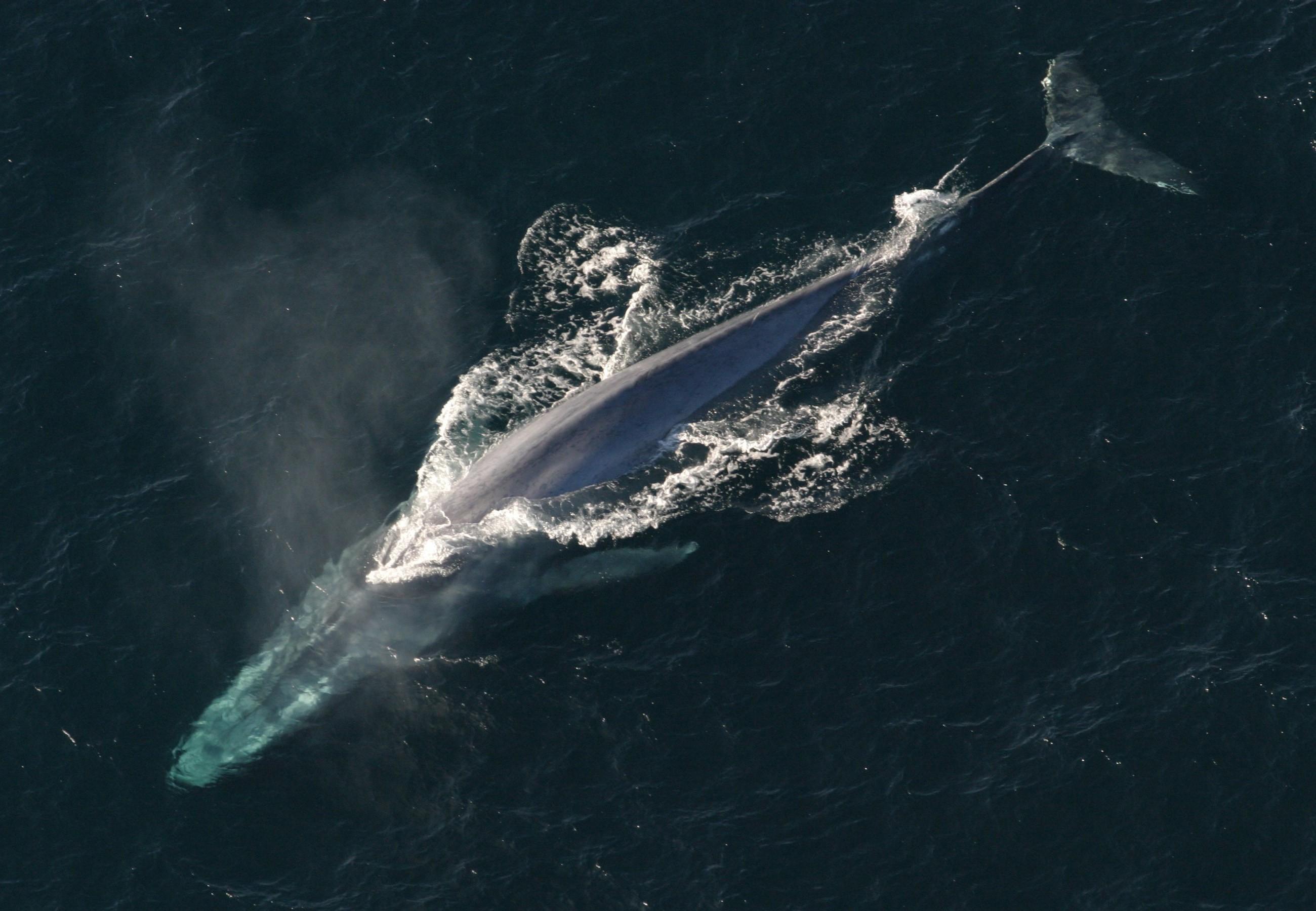 (Foto: Wikimedia/NOAA Photo Library - anim1754)