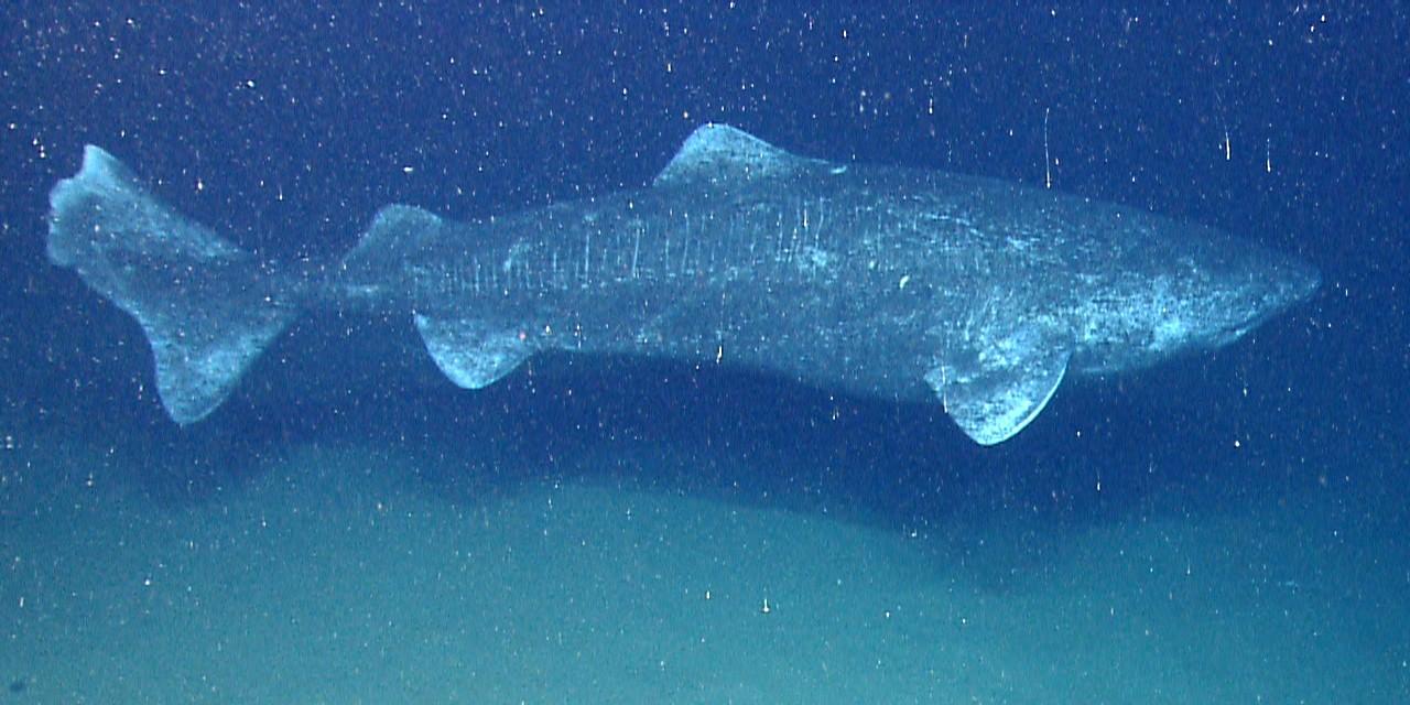 (Foto: Wikimedia/NOAA Okeanos Explorer Program)