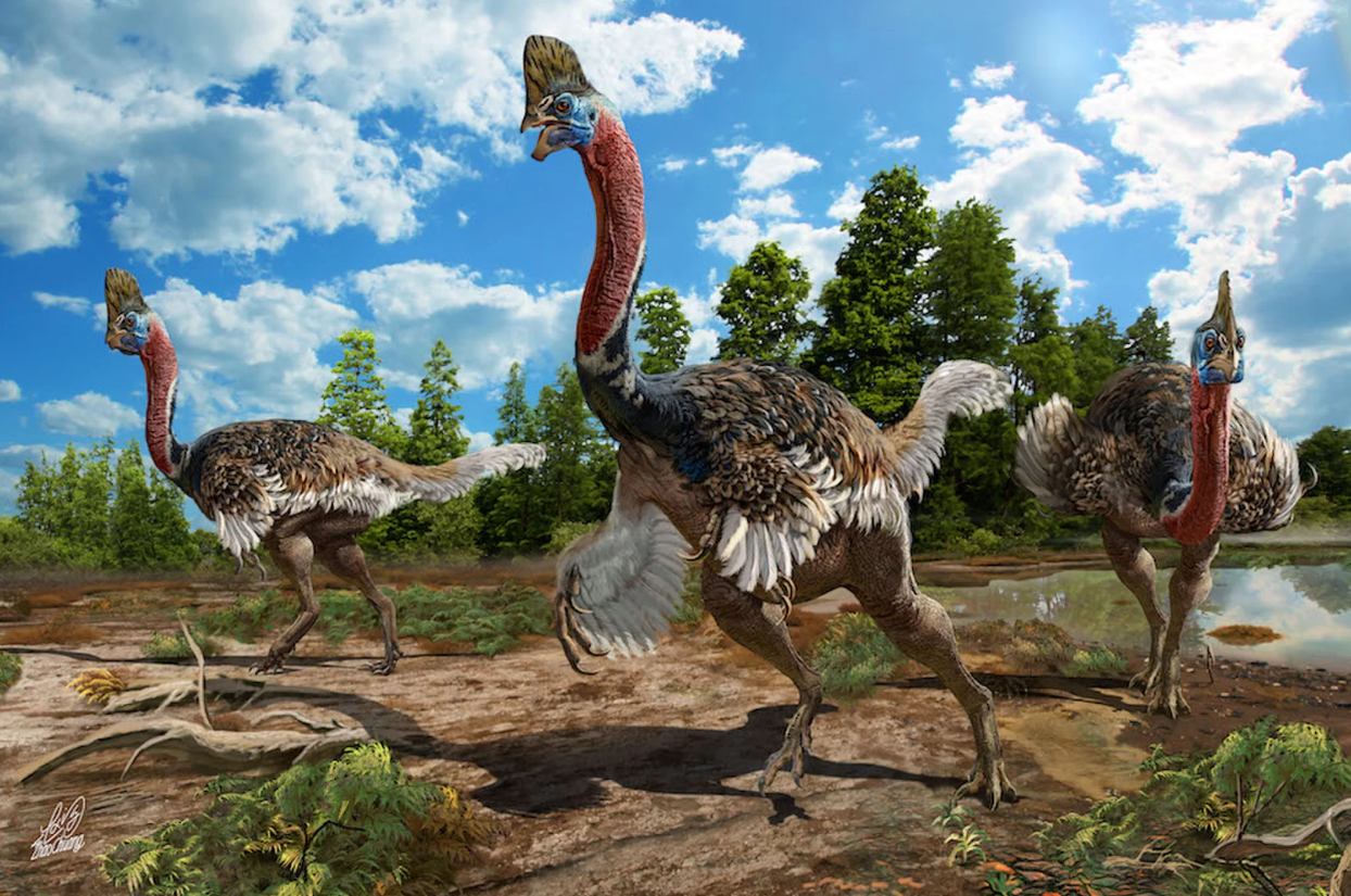 Corythoraptor jacobsi (Foto: Reprodução Zhao Chuang)