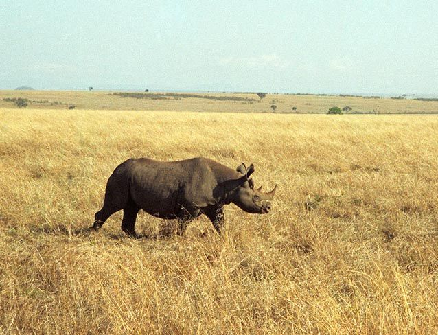 BlackRhinocerosInKenyanField.jpg.638x0_q80_crop-smart