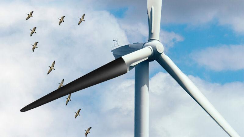 Mortes de pássaros caíram 70 por cento após pintar as pás da turbina eólica